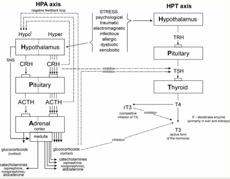 Thyroid hormones and adrenals