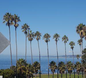 Californian Palm Trees