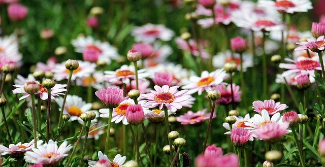 Flower garden for fertility